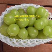 信州 小布施 シャインマスカット 900g~1キロ(2房) 900g~1キロ 果物(ぶどう) 通販