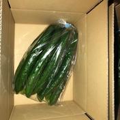 お試し 新鮮きゅうりA品 朝採り野菜 納期指定可能 2kg 福島県 通販
