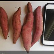 山梨県産さつまいも(紅はるか)ssサイズ2キロ 2キロ 果物や野菜などのお取り寄せ宅配食材通販産地直送アウル