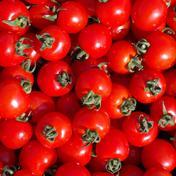 ミニトマト キャロルスター 無選別たっぷり2kg 2kg 野菜(トマト) 通販
