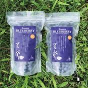 冷凍ブルーベリー【摘みたての果実を急速冷凍】 1kg 果物 通販