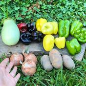 【限定販売】夏の旨さ食べ比べボックス✨ 黒ピーマン・クリームピーマン・幻のじゃがいも ・カルフォルニアピーマン・翡翠茄子・小玉ねぎ 農薬不使用 自然栽培 旬の野菜を80サイズの箱いっぱい入るだけお包みします! 広島県 通販