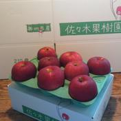 【ギフト】紅いわて約3kg 約3kg(8~9玉) 果物 通販