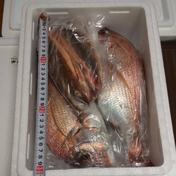 【訳あり】✨送料込み✨鮮魚セット🐟️ 1~2キロほど🐟️ 果物や野菜などのお取り寄せ宅配食材通販産地直送アウル