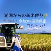 新米コシヒカリ 採れました!令和3年滋賀県産 コシヒカリ 白米箱込み5kgリサイクル箱 果物や野菜などのお取り寄せ宅配食材通販産地直送アウル
