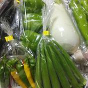 【お試し】1.5㎏ 旬の野菜セット✨ 送料無料 1.5㎏ 果物や野菜などのお取り寄せ宅配食材通販産地直送アウル