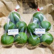 【自然栽培】大分県特産のかぼす10個(規格外のB品も含む無選別品・栽培期間中農薬、肥料不使用) 10個(約1kg前後) 大分県 通販