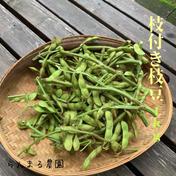 枝付き枝豆1kg 枝付き1kg 野菜(豆類) 通販
