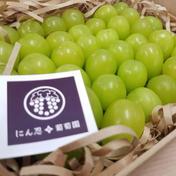 白丸BOX 約600g以上 葡萄 ぶどう 粒ぶどう ご褒美 贈答用 贈り物 ギフト にん忍葡萄園 一箱 約600g以上 果物(ぶどう) 通販