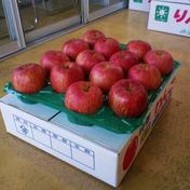 紅花ふじ14玉5㎏(発送は10月中旬~) 5.2kg 山形県 通販