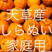 不知火 家庭用 15kg 箱込15kg 果物(柑橘類) 通販