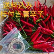 【送料込み】免疫up!(生)唐辛子 宅急便コンパクトにいっぱい 野菜(香辛料) 通販