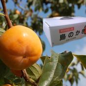 <期間限定> 佐渡のたねなし柿 「島のかき」5kg(農薬7割節減) 5キロ 果物(柿) 通販