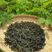 新茶「お試し価格」土佐のお茶 ハブ茶(手揉み) 30g 高知県 通販