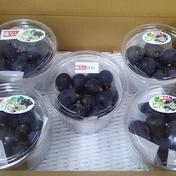 ぶどう粒 詰め合わせセット 1.5kg(300gパックx5個) 1.5kg 果物(ぶどう) 通販