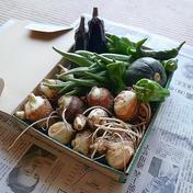 """朝どれ季節の無農薬やさい詰め合わせ""""初秋""""。。。 ヤマト運輸規定のコンパクトBOXいっぱい(500g~1.5kg)♪ 果物や野菜などのお取り寄せ宅配食材通販産地直送アウル"""
