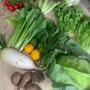 【大容量】旬の野菜セット 6〜8品目×2セット【農薬、化学肥料、除草剤不使用】  奈良県 通販