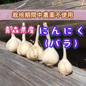 青森県産にんにく(バラ)【栽培期間中農薬不使用】(内容量約700g) 約700g 野菜(にんにく) 通販