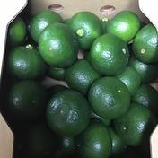 木酢(酢みかん)2キロ❗️5セット限り❗️ 1キロ✖︎2箱 果物 通販
