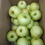 【旬の小玉⑤】トキ 約4.9kg 果物 通販