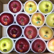 「送料無料」多品種詰め合わせBOX 約5キロ 12〜16玉 約5キロ 12〜16玉 荒谷農園