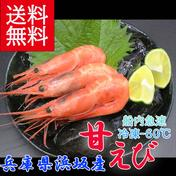 送料無料 兵庫県浜坂産 冷凍 甘エビ 子持ち無 約30尾前後 魚介類 通販