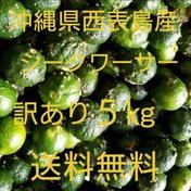 【送料無料】沖縄県西表島産 シークヮーサー 訳あり5㎏ 約5㎏ 果物(その他果物) 通販