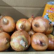 淡路島玉ねぎ5キロと玉ねぎスープセット 5キロ 果物や野菜などのお取り寄せ宅配食材通販産地直送アウル