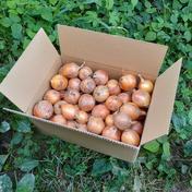 オーブンで丸ごと焼ける『子育て農家のミニミニ玉ねぎ』5㎏箱入り 農薬・化学肥料不使用 ミニ玉ねぎ5㎏ 野菜(玉ねぎ) 通販