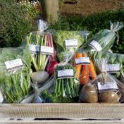 さくま農園「野菜の贈り物」 2~4㎏ さくま農園