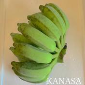無農薬ナムワ系バナナ(1kg) 1kg 果物(その他果物) 通販