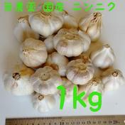 石川ファームのニンニク 1kg 野菜(にんにく) 通販