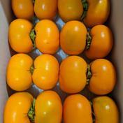 小山果樹園 秋の味覚‼ 家庭用種なし柿 約2.5kg(15個前後入り) 約2.5kg(15個前後入り)