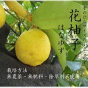 【皮まで安心】 農薬不使用 花ゆず 500g 500g 果物や野菜などのお取り寄せ宅配食材通販産地直送アウル