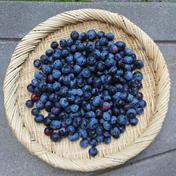 おとちゃんのブルーベリー(冷蔵) 1キロ 果物(その他果物) 通販