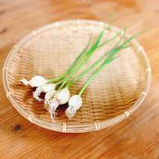 湧水発芽にんにく 50個入り(5個入×10パック) 野菜(にんにく) 通販