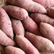 紅はるかサツマイモ4kg 4kg 野菜(さつまいも) 通販