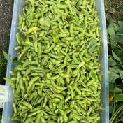 よなえ(大阪府産地直送) 無農薬枝豆2kg豆のみ 2kg