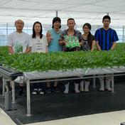 サラダほうれん草 1箱(70g10袋入り)×2  (合計70g20袋入り) 野菜(その他野菜) 通販