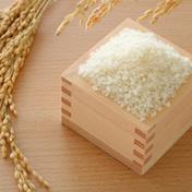 【大特価】特別栽培ななつぼし15kg 15kg 北海道 通販