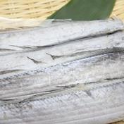 太刀魚一夜干300g 300g 富山県 通販