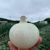 鮮やか彩り3種4kgセット🧅淡路島極熟玉葱2kg とレッドオニオン1.5kgとホワイトベアー2玉の今だけの食べ比べセット🧅 彩り3種4kg 野菜(玉ねぎ) 通販