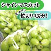 【送料込み】シャインマスカット粒切りぶどうパックたっぷり2kg! 2kg 果物(ぶどう) 通販