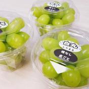白丸ダイヤ 三個約900g以上 葡萄 ぶどう 粒ぶどう お中元 ご褒美 贈答用 贈り物 ギフト にん忍葡萄園 三個 約900g以上(一個 約300g) 果物(ぶどう) 通販