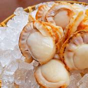 高たんぱく質栄養満点食材【青森県産ボイルほたて】 1kg 魚介類(ホタテ) 通販