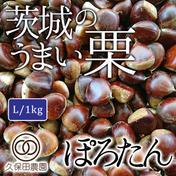 茨城のうまい栗(ぽろたん) Lサイズ(約1kg/約48個) 約1kg(Lサイズ/約48個) 果物(栗) 通販