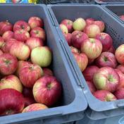 シナノスイートB品 5kg 果物や野菜などのお取り寄せ宅配食材通販産地直送アウル