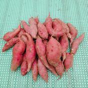 11月発送【訳あり/ご自宅用】ふぞろいのサツマイモ シルクスイート 1.8kg 1.8kg 果物や野菜などのお取り寄せ宅配食材通販産地直送アウル