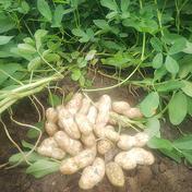 大きな生落花生 おおまさり 1.0kg 果物や野菜などのお取り寄せ宅配食材通販産地直送アウル