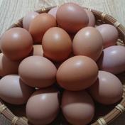 卵かけご飯に最高!平飼い新鮮たまご 元気玉小玉【40個】 約2kg 卵(鶏卵) 通販